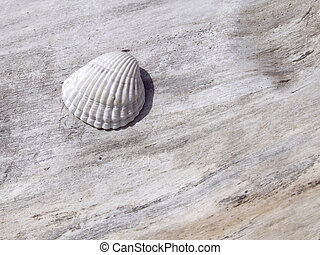 Shell on the trunk