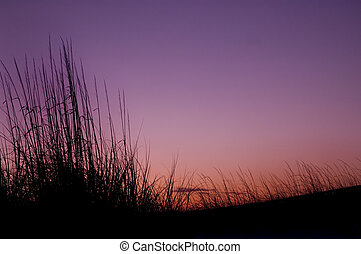 evening seagrass - beautiful sunset background with...