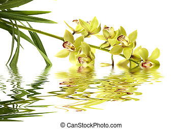 Orchid - A beautiful fresh orchid