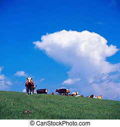 cow in rural