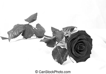 Black and white rose - black and white shot of a red rose in...