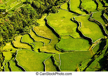 Rice Terraces - Hapao Rice Terraces, North of Manila,...