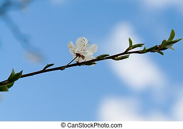 White flower with blue sky at background