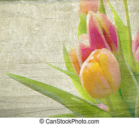 Spring Flowers - Spring Yellow and Pink Tulips