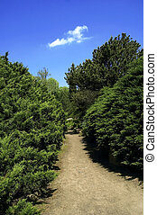 summer scenic path - summer scenic road path forest country...