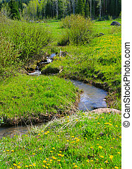 Mountain Meadow Stream - Tiny stream, fed by snow melting in...