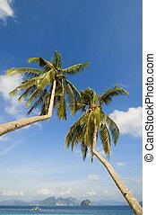 Coconut Trees - Bent coconut trees