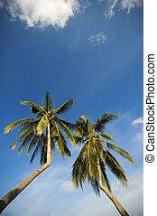 Coconut Trees - Bent coconut trees in resort