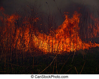 Flame 2 - A brush fire. A close-up of the flame. Russian Far...