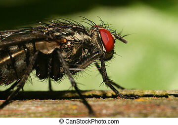Extreme fly macro - An extreme macro of an fly resting on...