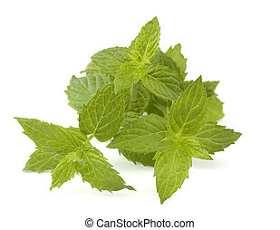 mint - fresh mint leaves isolated on white close up