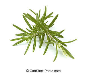 rosemary branches close up on white background