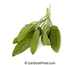 sage - fresh sage leaves isolated on white close up