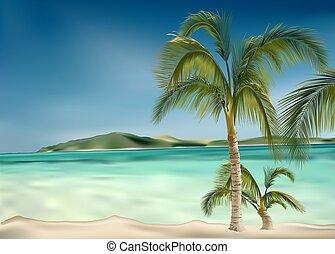 Palms beach