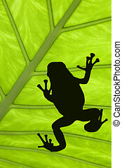 Treefrog silhouetted on a green leaf