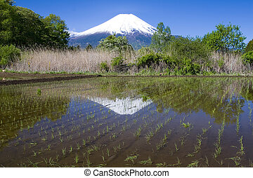 Rice Paddy - A newly planted rice paddy in the Japanese...