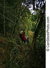 Canopy tour 1 - Woman in harness on canopy going towards the...