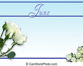 June Day on Blue Gradient - White roses isolated on blue...
