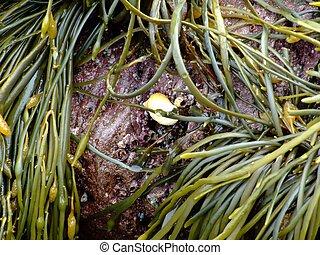 seaweed macro seaweed is used in toothpaste,icecream,soaps...