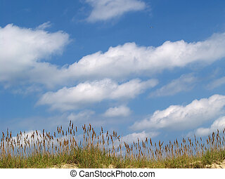 Coastal Summer Tranquility - A view of the tops of seagrass...