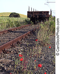 Poppies in the railway