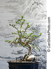 Bonsai tree in the pot with traditional Chinese art in the...