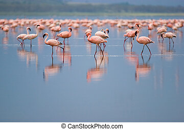 Flamingos at Nakuru Lake, Kenya