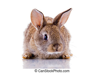 Bunny - Cute bunny looking at the camera. Isolated on white...