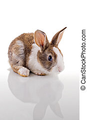 Cute Bunny - Cute bunny with curious look, looking at the...