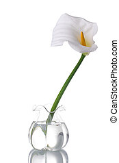 White Calla Lilly - A white calla on a glass jar with water,...