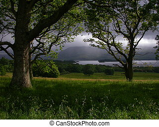 Irish Forest - A landscape 5 km northwest of Killarney, in...