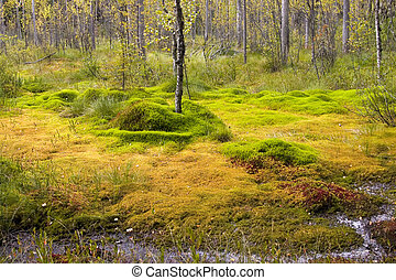 Bright bog - Bright-green bog in the summer in Kareliya