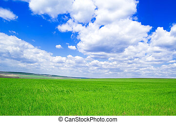 The fields and sky - The spring fields and blue sky