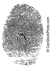 Fingerprint - Detailed black fingerprint isolated on white...