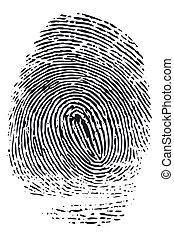 Fingerprint - Detailed black fingerprint isolated on white...