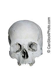 Skull - Human Skull