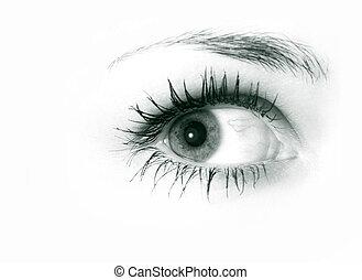 Female eye close-up isolated on white