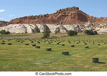 Bales with Butte - Hay bales in field in front of sandstone...
