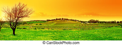 Fresh Vineyard Panoramic - Panoramic Image of a Tree and a...