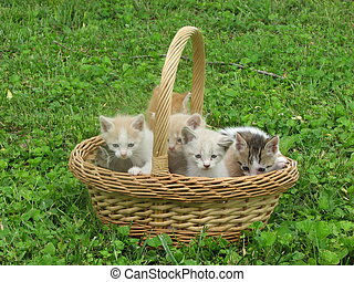 Kittens family in Basket - Several adorable kittens in a...