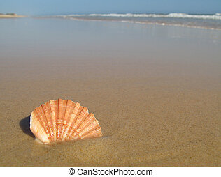 Sea Shell On The Beach - A pink sea shell on a beach in...