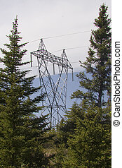 Powerlines in the forest of Newfoundland