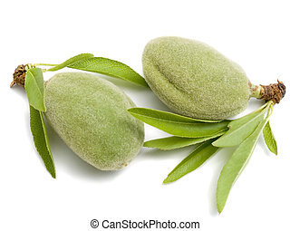 Two young almonds