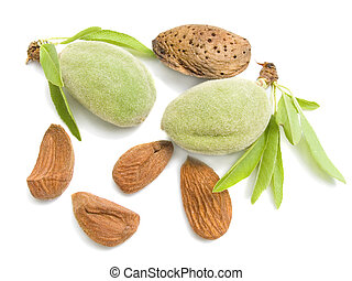 young almonds