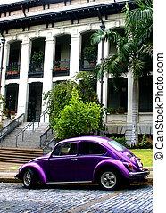 紫色, volkswagen