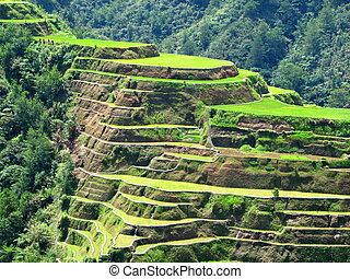 Banaue Rice Terraces - A shot of the rice terraces at...