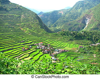 Batad Village and Terrace - A shot of the village of Batad...