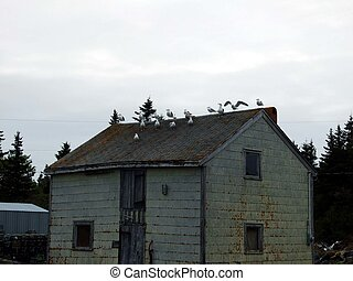 seagulls on rooftop - seagulls on the rooftop of a old...