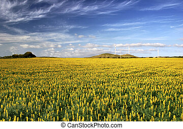 Yellow field with flowers - Yellow flowery landscape with a...