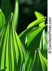 Hosta Leaves create interesting patterns